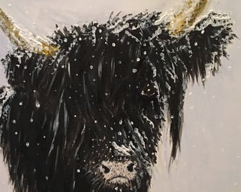 Black highland cow in winter