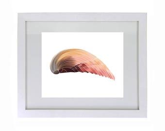 Sea Shell Beach Print