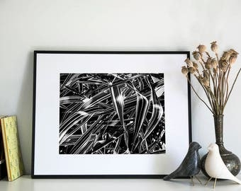 Abstract Grasses, Photographic Print, 5x7, 8x10