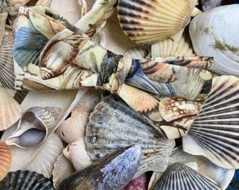Ready Tied Bow Tie Seashells