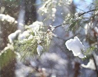 """Instant Digital Download Color Nature Photography """"The Ephemeral First Snowfall"""" Printable"""