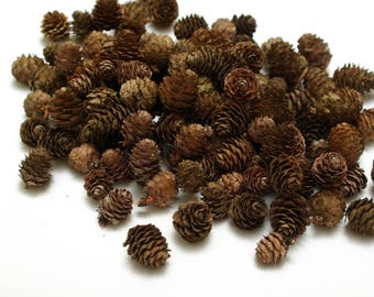 Larch cones 100 pcs, christmas wreath cones, dry natural cones, floristic decoration, wedding decoration, small cones, rustic craft cones #1