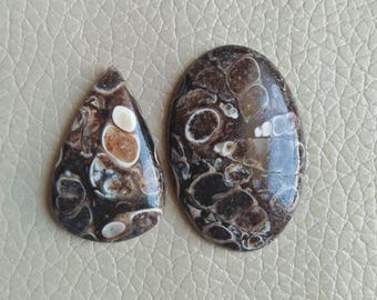Turritella Agate 54 Carat Cabochon, Turritella Agate Size 37x25x6, 31x21x6 MM Approx, Turritella Agate Loose Gemstone, Jewellery Stone.