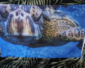 Close Encounter of a Honu Kind Pillow Case