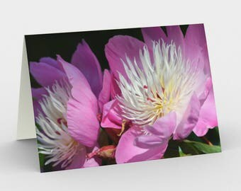 Pink Peonies - Bowl of Beauty Blossoms - Set of 3 Blank Cards - Thank You Cards - Greeting Cards - Nature Cards - Flower Cards