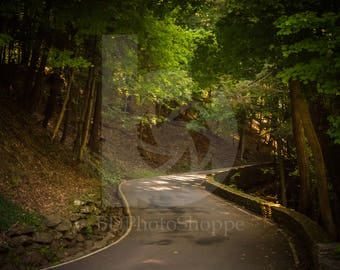 Winding Forest Road | Landscape Photo Art | Nature Lover Gift | Fine Art Photography | Personalization | BDPhotoShoppe | Home Office Decor