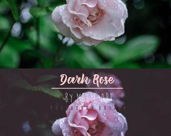 Dark Rose - Photoshop Action