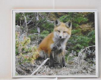 One of the kits of the mama fox taken on Dory Hill Rd