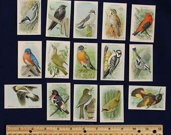 Useful Birds of America Series 9 Card Set