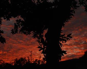Red sky's