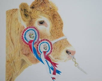 Mounted origional Giclee Print of 'Best in Show' Limousin Bull