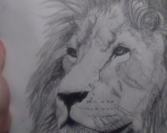 Daydreaming Lion