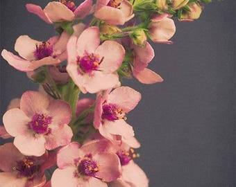 Botanical Print, Large Flower Photography, Flower Print, Verbascum Flower Art Print, Dark, Floral Photography, Wall Art Print