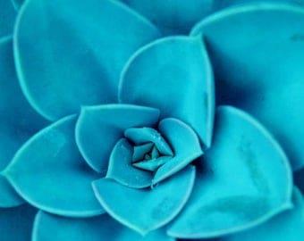 50% OFF SALE Botanical Print Aqua Blue Large Wall Art Succulent in Mint Teal Turquoise Blue - 20x20 inch Fine Art Photography Print - Succul