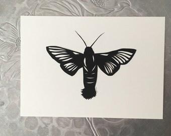 Hummingbird Moth Silhouette Papercutting