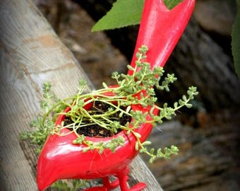 Save25% Metal  Bird planter-Automic Red with baby tear sedums-Crow about this one to your friend