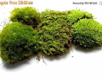 Save25% Live Moss ,fern moss,sheet moss,pillow moss,roughstalk moss,reindeer moss-Quart Bag of 3 moss varieties and 5 sections-Organic moss