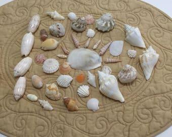 One Pound Box Variety of Sea Shells