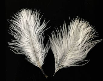 Confetti Feathers, 1 Pack - OFF WHITE Ostrich Small Confetti Feathers 0.3 oz : 1173