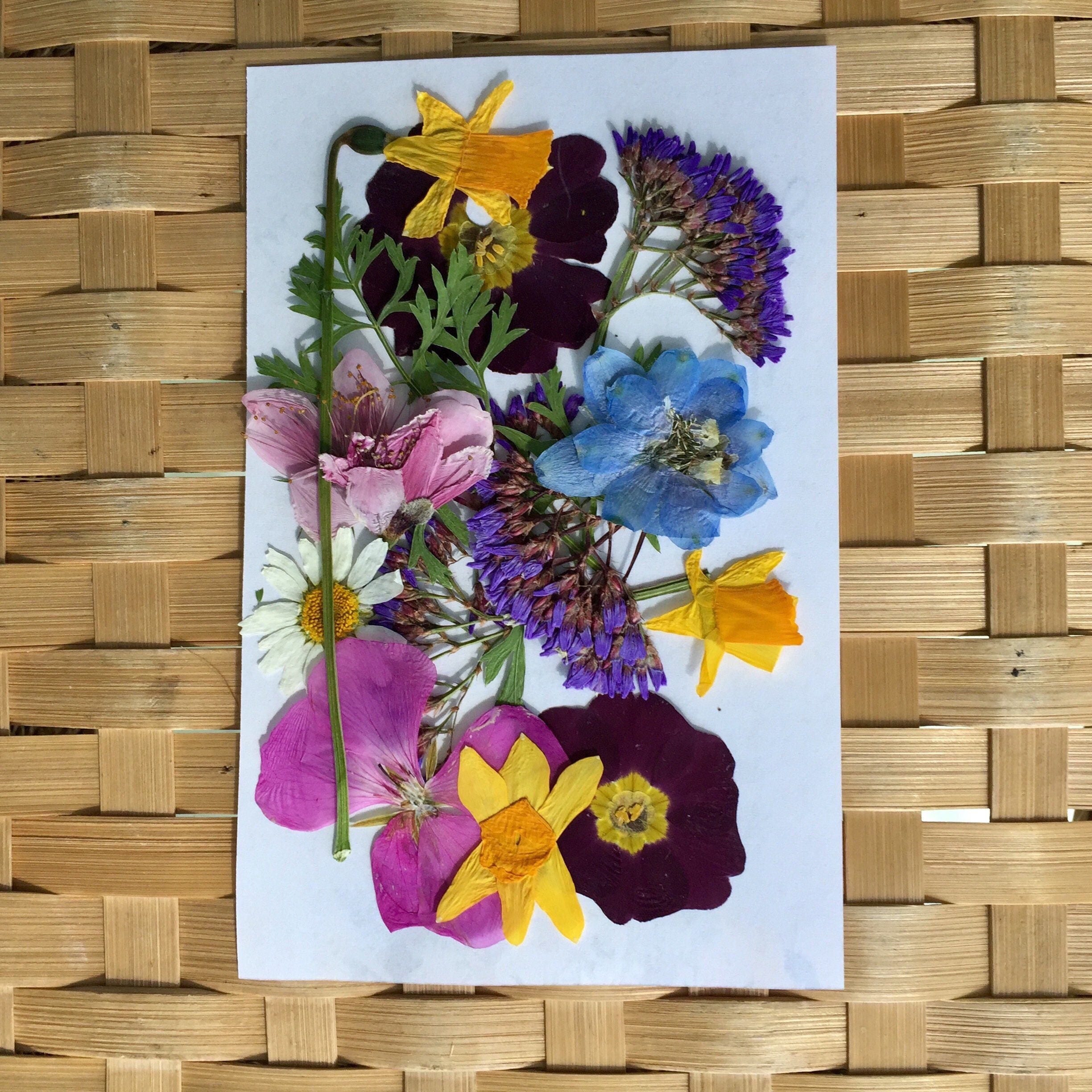200 pressed flowers petals and leaves dried flowers