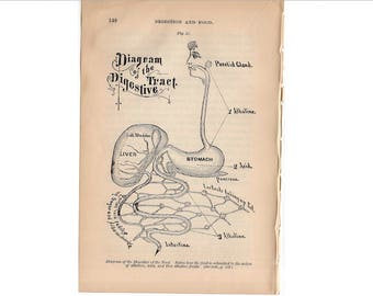 c. 1884 HUMAN ANATOMY PRINT - digestive tract - stomach liver intestine - antique medical print - medical illustration - digestive system