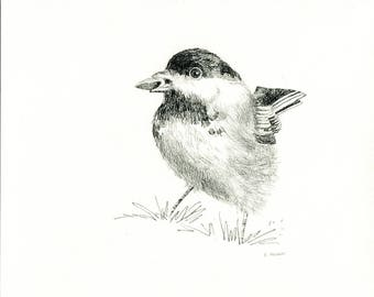 Chickadee 8 x 10 Original Hand Drawn Sketch