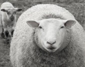 The Ewe and Lamb
