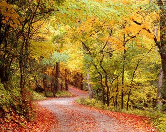 Autumn Country Road 4x6 Fall Foliage