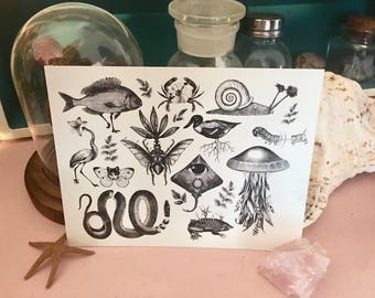 Curiosty Cabinet Original Collage Print with UV protection a Surreal Scientific Illustration or weird tattoo flash sheet