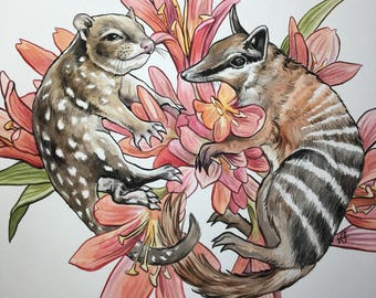 ORIGINAL Quoll and Numbat Watercolor Painting 11x14 inches floral