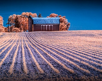 Rows in a Farm Field with Barn and Silo in Infrared in West Michigan No.1683 A Fine Art Agricultural Photograph