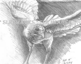 turkey in flight drawing in pencil print
