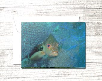 Peekaboo Fish Card | Underwater Dive Art | Greeting Card | Colorful Fish card | Underwater Note Card | Card for scuba diver