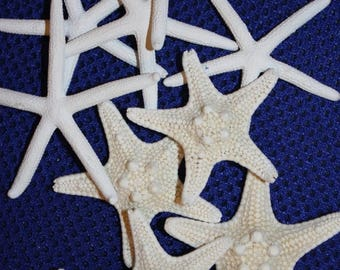 15% OFF 20 each white fingerling starfish and knobby armored starfish, free shipping, top quality starfish combo, crafts, bleached, #49, 71