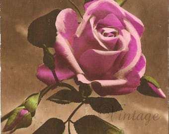 Antique French Postcard Shabby Pink Roses & Rosebuds, Tinted Photo Post Card from Vintage Paper Attic