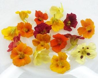 50+ Organic, Real EDIBLE NASTURTIUMS, Fresh, Red, Burgandy, Orange, Yellow, Flowers, Bulk, Salads, Wedding Cakes, Free Overnight
