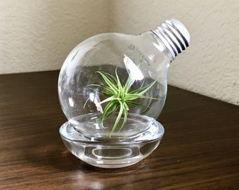 Air Plant Light Bulb Terrarium, Airplant Lightbulb Glass Terrarium, Repurposed Lightbulb Air Plant Terrarium Repurposed Light Bulb Terrarium