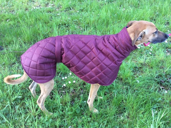 Whippet waterproof and fleece lined all in one collarless coat