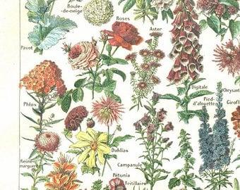 1922 Vintage botanical print Flowers poster antique botanical print French dictionary page floral poster Botanical art Botanical poster