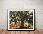 tree photography print / ...