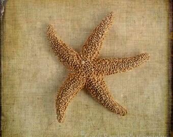 Seastar, Starfish, Seashell Photography, Still Life Photography, Beach Photography, Nautical