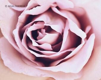 Pink Wall Art Print, Rose Print Art, Rose Photography, Pink Rose Art, Large Flower Wall Art, Pink Wall Decor, Bedroom Art, Rose Photo Print
