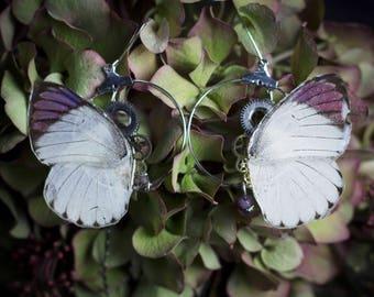 Boulces d'oreille Imago véritable ailes de papillon Colotis Zoé