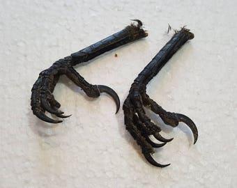 Real dried crow feet