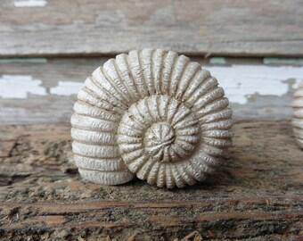 CONCH SHELL Decorative Dresser Drawer Pull Knob - Beach Nautical Coastal Home Decor ~ Creamy Sand Color Sea Shell
