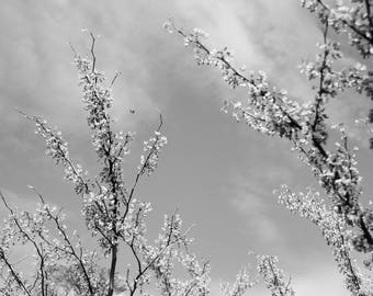 Black and White Nature Collection - Blossom and Bee