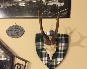 European Roe Deer Antler,  Horns on Blue, Green and White Tartan Plaid plaque, Mounted horns, Trophy Plaque, Scottish, Cabin, Ralph Lauren