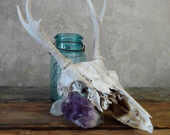 Small Sized Deer Skull With Antlers and Moss, wall hanging natural taxidermy, animal skull