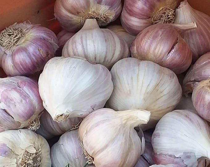 German Red Garlic Bulbs Organic Grown Gourmet - 1 lb. For Planting or Cooking Cold Hardy Variety Fall Shipping Non-GMO