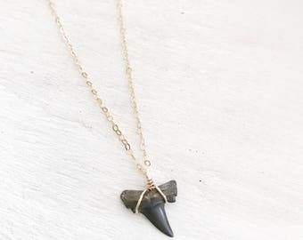 14k Gold Filled Fossil Shark Tooth Necklace